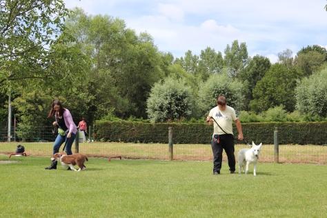 Hondenschool Leirekensdomein 20-06-2020 (104)