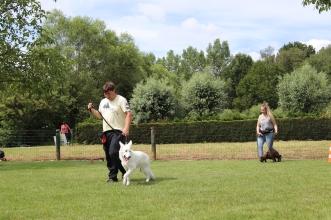 Hondenschool Leirekensdomein 20-06-2020 (105)