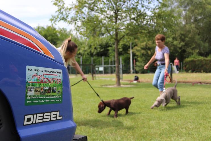 Hondenschool Leirekensdomein 20-06-2020 (107)