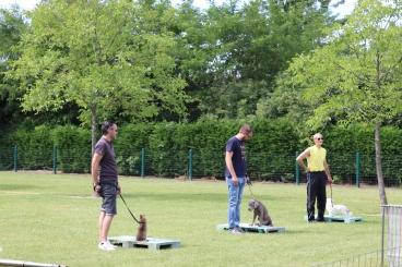 Hondenschool Leirekensdomein 20-06-2020 (29)