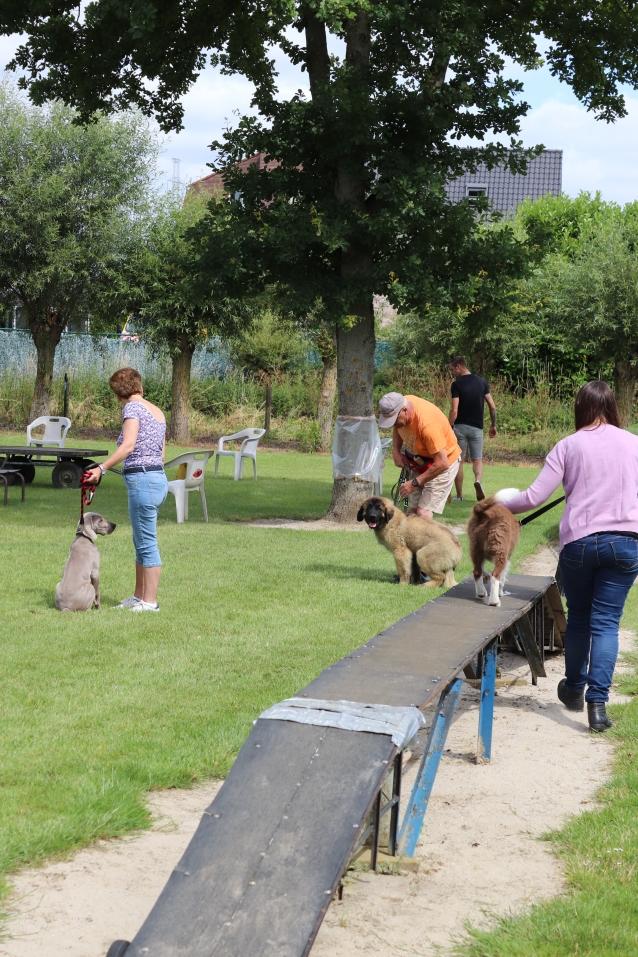 Hondenschool Leirekensdomein 20-06-2020 (36)