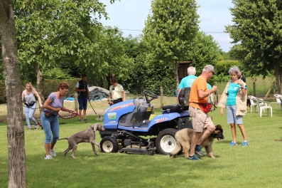 Hondenschool Leirekensdomein 20-06-2020 (64)