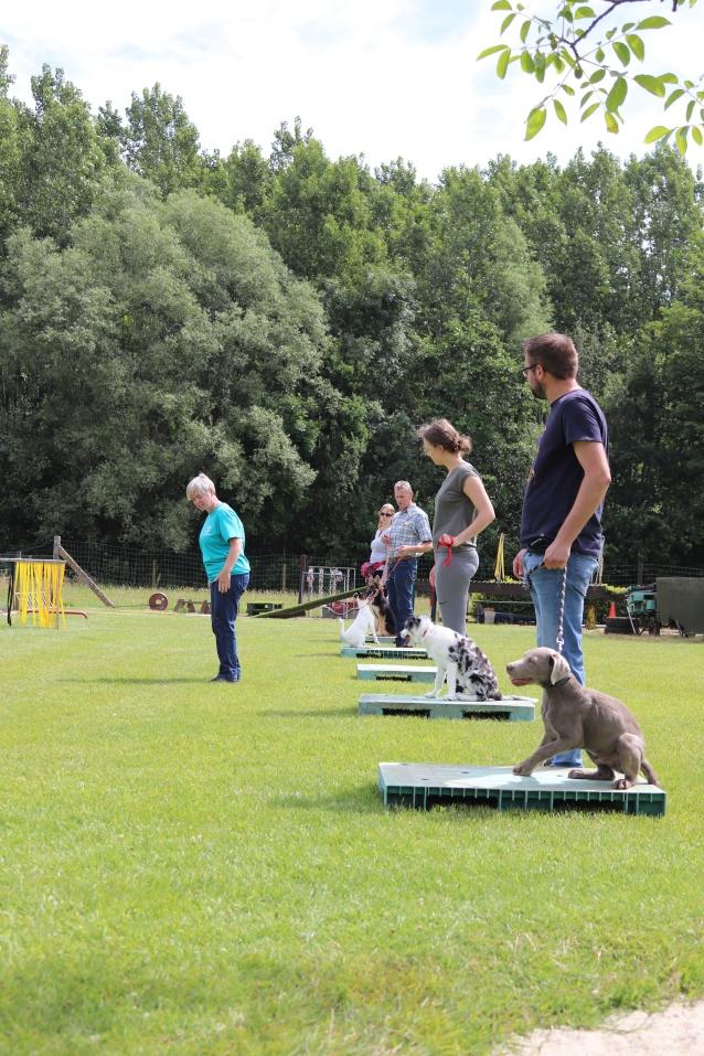 Hondenschool Leirekensdomein 20-06-2020 (74)