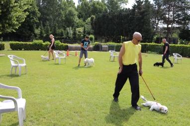 Hondenschool Leirekensdomein 20-06-2020 (79)