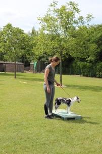 Hondenschool Leirekensdomein 20-06-2020 (97)